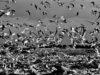 malagrotta-landfill-rome